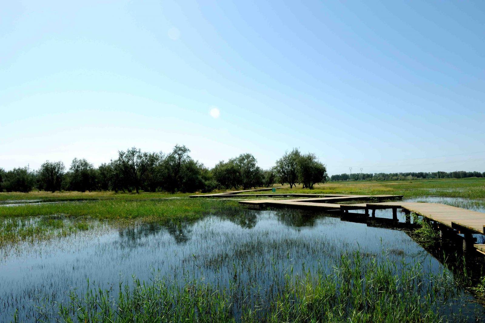 孟津县湿地局湿地保护区水渠及道路项目.jpg